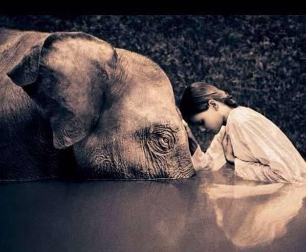 RT @BuddhaBrian: #Love and #Compassion are Necessities, Not Luxuries, Without Them Man Cannot Survive~#hour4peace @manjushriNL http://t.co/zQrs2cmmxG