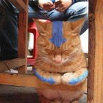 The Last Catbender. http://t.co/EuTZrVVl7m