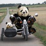 RT @satoshi551: Оказывается сегодня, 29 августа – День рождения мотоцикла! (129 лет) http://t.co/akHIWQ4491