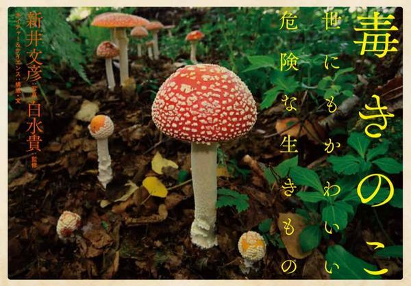 情報解禁!9月19日に幻冬舎から『毒きのこ』という本が発売されます! 詳しくは → http://t.co/FYxLRqFr1M  どうぞよろしくお願いします。 http://t.co/LJQE6WDNU2