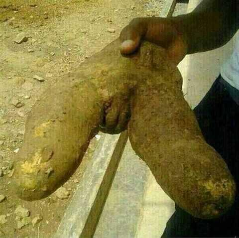 """@RicagLOL: LMAO...  She Cheated And Was Turned Into YAM ..  ""@marzu_awal: I need an explanation http://t.co/oMhrt5k2MW"""""