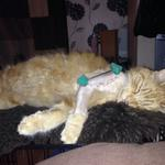 RT @LostboxUK: URGENT! Very poorly #cat missing! #Sydenham #London Sunny has just had surgery & needs care! http://t.co/YVdUir664H http://t.co/tw2UObtvyf