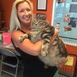 Com 16,3 kg, gato obeso fará dieta e exercícios para perder peso http://t.co/biXCPVNbTy #G1PlanetaBizarro http://t.co/JHzaXlouHR