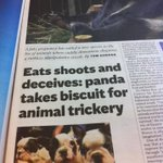 RT @cghgreen: Magnificent headline on @Independent panda trickery story. http://t.co/DkMRxg4Xt7