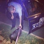 RT @kcpolice: Cute pic sent to us on FB of officer greeting residents pet pig Marlee last nite (yeah, insert police-pig joke here) http://t.co/jdxS3nuJTv