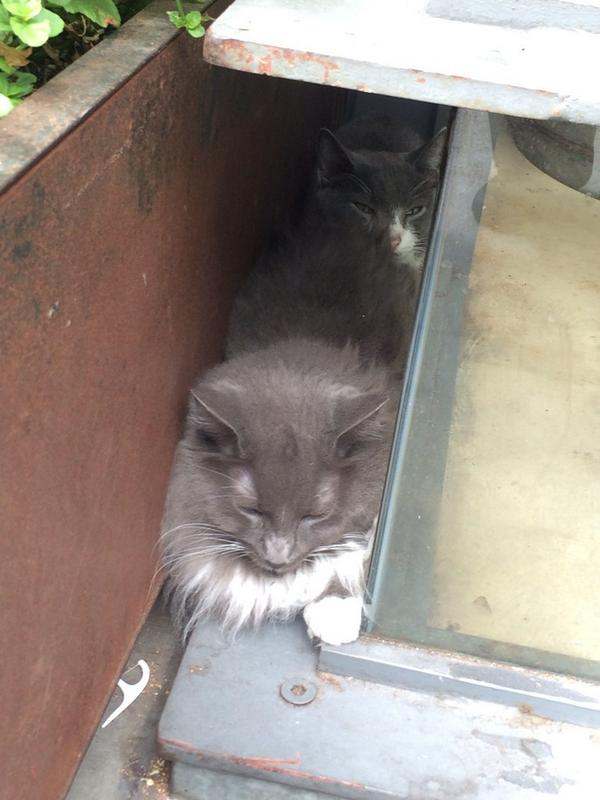 Lost housecats found at Fell & Gough. Staying safe tonight @isotopecomics. Help us find owners @sfspca! @mlaffs http://t.co/NotAgMA6nY