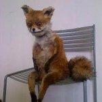 Mi reacción al ver a las candidatas a Señorita Quetzaltenango de este año.... http://t.co/Jzswk0OaaH