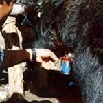 In #nepal people drinks blood of alive yak.they arange fair in manang n mustang . http://t.co/d39zrv80bZ