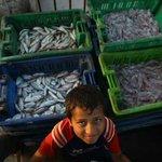 RT @rdooan: بفضل الله أنواع جديدة من الأسماك تدخل أسواق #غزة، وبكميات كبيرة بعد أن انتزعت المقاومة حق الصيد بمسافات ضعف السابقة. http://t.co/umELnPQNKO
