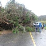 """""""ATENCIÓN: A la altura del km 7 1/2 vía #Loja-#Malacatos sector Capuli paso interrumpido caída de árbol."""" http://t.co/MqIOLawUYG"""