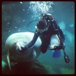 Mr. Manatee getting some lunch today at the #dallas #aquarium ???????????? #Dallas http://t.co/MolTy5CitU