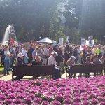 RT @zippydazipster: #nofibs #Sydney #marchinaugust http://t.co/JZktRoLeq8