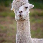RT @kyuzizi: 머리가.. 동우?야? http://t.co/EeNbRZVJmH