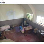 """Oh Ipswich. """"@BuzzFeedUK: No one knows why this house for sale in Ipswich has a pig in it http://t.co/mVX6EH3DIQ http://t.co/lGxbIwZ0yn"""""""