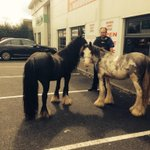 Lost 2 horses in Warrington Town Centre? Please come and collect them! Thanks. http://t.co/1BXOMC6vdE