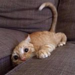 When you lose your phone in the couch but you cant find it http://t.co/yw6mShYyNo