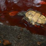 RT @lajornadaonline: #Derrame de petróleo en río de #Veracruz mata cientos de aves, peces y animales terrestres http://t.co/Pf34XUyR3F http://t.co/kGb9hiTEjA