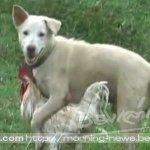 #เรียกรอยยิ้ม แฟนข่าวบุรีรัมย์ส่งคลิปน่ารัก สุนัขกับเจ้าไก่ เพื่อนซี้ต่างสายพันธุ์ http://t.co/28AaDsQyUj http://t.co/HjqY5xcPnL