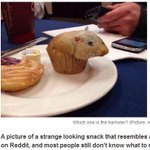 RT @livedoornews: 【リアル】ハムスターに似すぎて食べにくいマフィン http://t.co/XwcUquNNCg あまりにもリアルで「うちはハムスターを飼っている。残酷すぎて食べられない」という声も。 http://t.co/8OHj2T4jnE