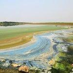 【浙江省】余姚杭州湾に七色の油汚染帯が出現 http://t.co/XjX39JrHtO 廃棄されたゴミは、悪臭が鼻を突き、ハエが群れをなして飛び回っている。時々、トラックでゴミを捨てていく。野生海鳥の生存環境が脅かされている。 http://t.co/z3zGYGz2O8