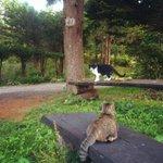 RT @myumyulovemyu: 今日も、松の木の下ではぽろぽろ ぽろぽろ、松ぼっくりのかけらが降り続いています。 (*ΦωΦ)。oO(リスさん、一日中食べてる…) http://t.co/82P3vTBi52