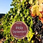 RT @VinoSacra: ¡Hola septiembre! ^_^ Bienvenido a la Ribeira Sacra ,) #septiembre #vino #vinos #galicia #vendimia http://t.co/b5walAMN63