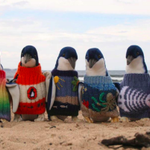 We've detected the first Autumn chill in the air, so we're putting our jumpers on. http://t.co/c0jLfE543j