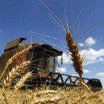 """RT @infobae: Advierten que es """"muy elevada"""" la posibilidad de que se pierda parte de la cosecha de trigo http://t.co/gtMP6sADU0 http://t.co/JDc3MgRglr"""