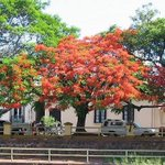 Arranca el mes que mas me gusta del año!! Aca postales de Corrientes con sus lapachos floridos ???????????????????????? #Septiembre http://t.co/UAfYnvzzCr