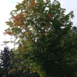 RT @BruceAHeyman: September 1st walk I see the first signs of fall #Ottawa It was an awesome summer traveling this beautiful country http://t.co/reCBdf9MVv