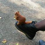 Ein Eichhörnchen saß auf meinem Schuh und hat eine Nuss gefuttert. Heute ist ein guter Tag. http://t.co/YKGsBpGZfO