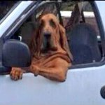 BREAKING: Harry Redknapp arrives back at the QPR Training Ground. http://t.co/MMW4YIp53W