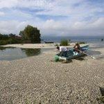 تحقيق في المكسيك بعد نفوق أطنان من الأسماك في بحيرة بغرب البلاد http://t.co/0VfTXG50SB http://t.co/KiNLdLju6U