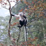 ICYMI (v @FaunaFloraInt):World's leading primatologists in Vietnam for intl summit http://t.co/loOVEnN3tz http://t.co/NYIwI6ptCw
