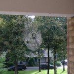 Spinnenwebben aan de goudkust in Utrecht Lunetten. http://t.co/eBa9bkXL6F