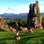 Parque de la Naturaleza de #Cabarceno #Cantabria http://t.co/Klb5vPCbmD