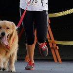 RT @folha_com: Abertas as inscrições para corrida de cachorros com seus donos. http://t.co/jLMFaEGxH5 http://t.co/AdWJoMI3yR