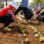 RT @nbcbayarea: San Francisco to become 1st in California to encourage urban farming: report http://t.co/zMG97RWYYD http://t.co/t3hU6uTiKC