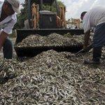 Toneladas de peces muertos en lago mexicano #Nicaragua http://t.co/74pTfskqXf http://t.co/aOZ2rZR18B