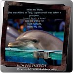 RT @leabaldwin: we will never give up...#tweet4taiji http://t.co/c9mFI1CNBE