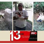 #DENUNCIA: Circula en internet imágenes de un supuesto trabajador del Ministerio de Salud matando a perros con rabia. http://t.co/6a7FjJuNL7