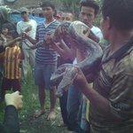 Ditemukan ular besar di rumah warga di daerah buah batu @infobandung @ridwankamil http://t.co/yS2MuIP108
