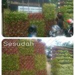 Proses pemasangan vertical garden tanaman hias di SMAN 8 Bandung @ridwankamil http://t.co/UcLGn38v3E