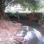 RT @TwiterosCali: #FotoDenuncia @MisRiosCali: Sin defensa Río Meléndez claudica por Aguas Negras http://t.co/ryK2kn0gzV @rodrigoguerrerr @AmaneciendoTP