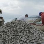 Aparecen toneladas de peces muertos en una laguna de México [VÍDEO] http://t.co/HF87he3sN2 http://t.co/NywXljYzQS