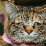RT @A3Noticias: Conoce en Esto No es Noticia a Tucker, la gata más triste del mundo que ahora es feliz http://t.co/XWr5HdUVzK http://t.co/dDE53yZmWW