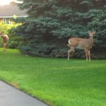 RT @CTRoch: Staredown on Michelle Drive on a muggy Tuesday morning. #ROC http://t.co/cO4bzvcsAY