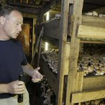 With Kennett Square at the forefront, mushrooms are Pa.s largest cash crop: http://t.co/lrZuEqwvKh http://t.co/n96nYsypok