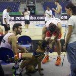 RT @Spanish_NBA: La foto del día: Pau Gasol dando de beber a uno de los perros guías que velan por la seguridad de Mundial. #Spain2014 http://t.co/CiB3MO5Zyi
