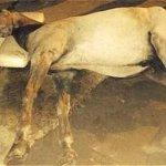 RT @ELTIEMPO: Muere un caballo cochero en plena calle de Cartagena http://t.co/pqvHvutbm9 http://t.co/pqnCU4Te1R